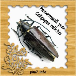 Фото жук реликтовый дровосек — Что говорят насекомые