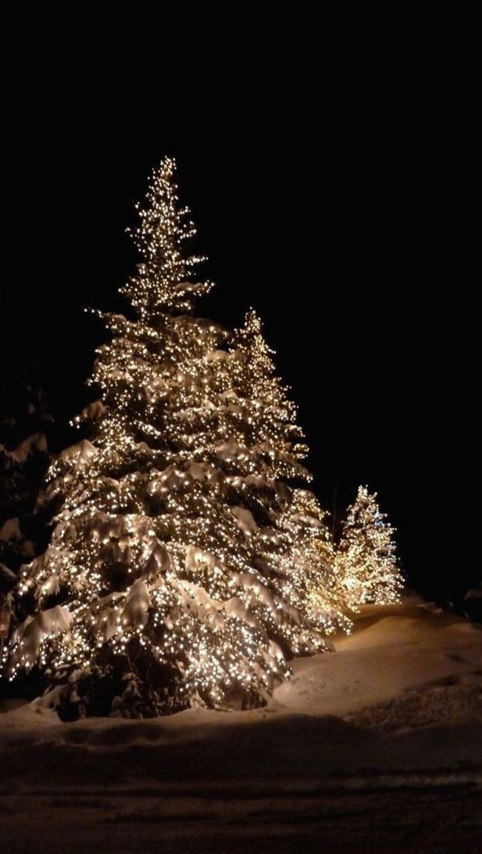 Amazing Christmas Lights Tree Decoration Ideas 30