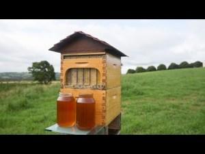 Comment gagner 12millions de dollar avec une vidéo youtube ? Flow™ Hive Full Reveal