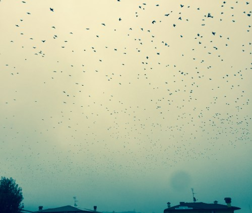 Birds in the sky ©pinadamato