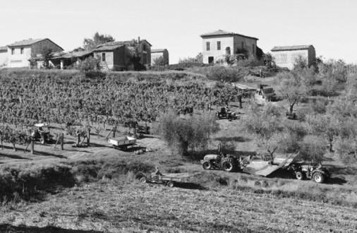 Memoria Narrante, agricoltura, foto web