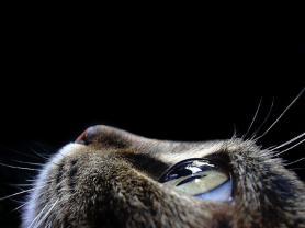 Memoria Narrante, gatto, foto web