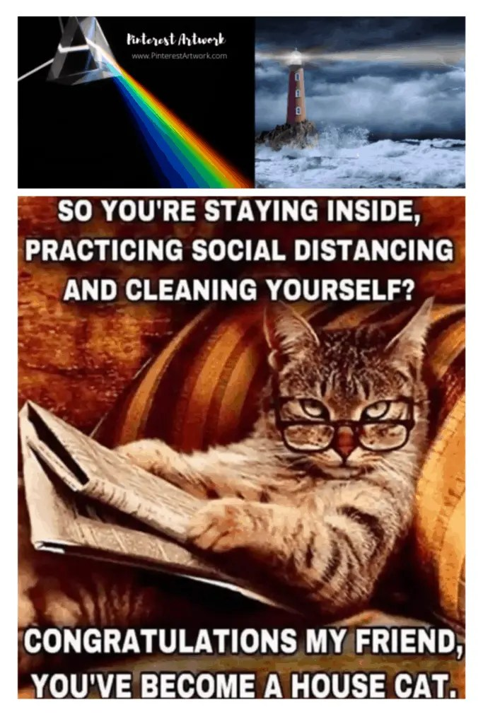 Are you a house cat?