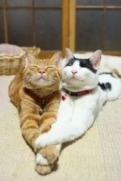 cats5 1 A blog for the love of Pinterest