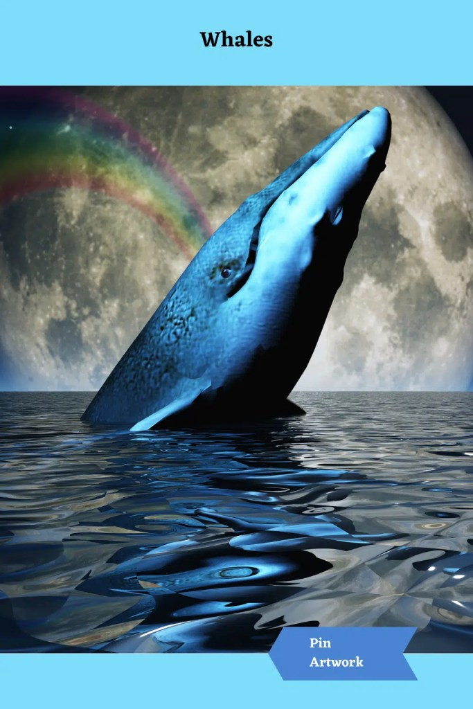 Whales 12 A blog for the love of Pinterest