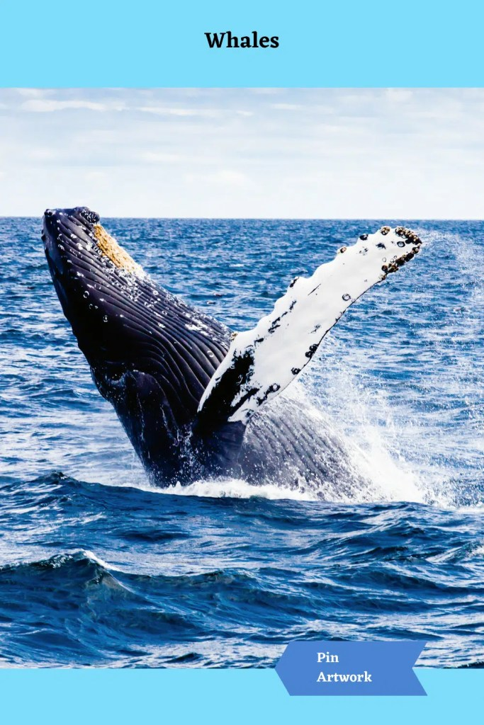 Whales 7 A blog for the love of Pinterest