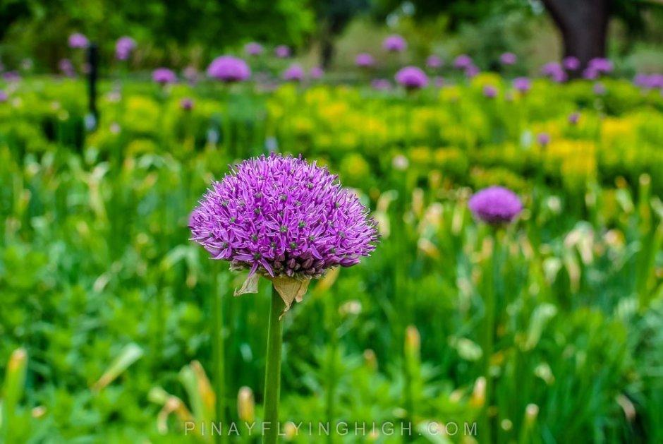 Kew Gardens - PinayFlyingHigh.com-509