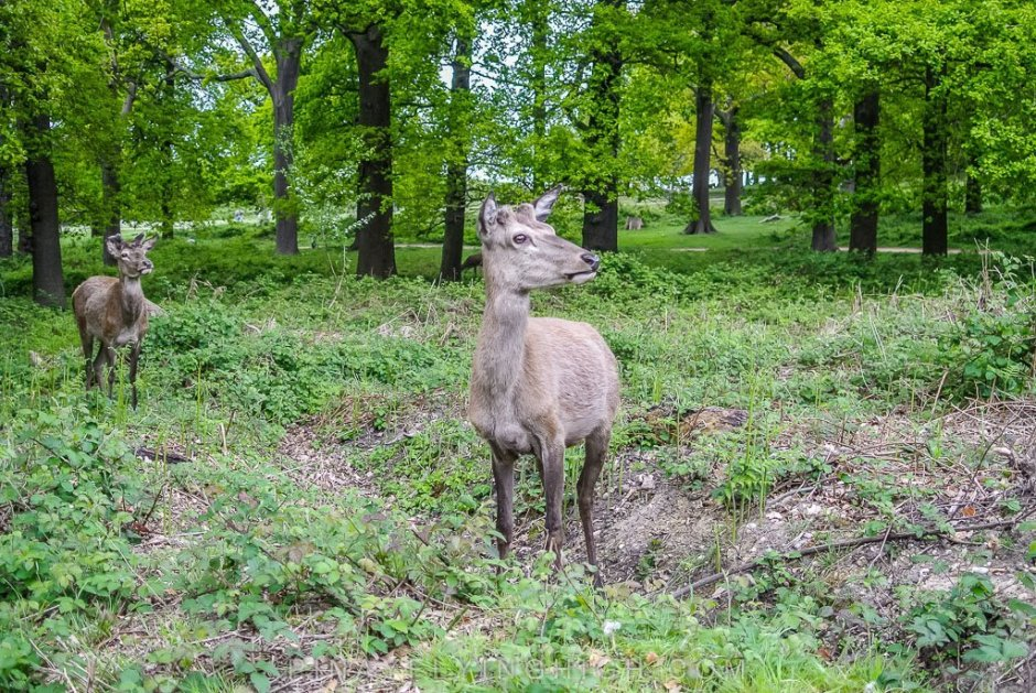 Richmond Park - PinayFlyingHigh.com-502