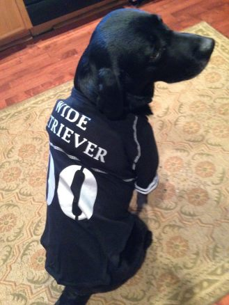 """A labrador retriever wearing a jersey with """"wide retriever"""" on the back. (Photo courtesy of Kyndall Holstead)"""