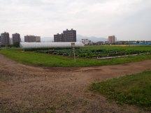 Essais agricoles