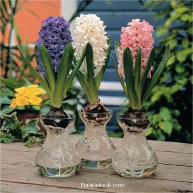 plant-seeds-garden-diy-font-b-hyacinth-b-font-garden-supplies-font-b-flower-b-font