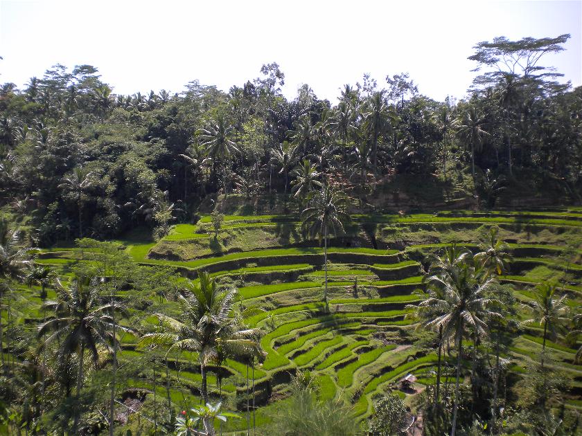 Arrozales Ceking, Tegalallang, Bali, Indonesia