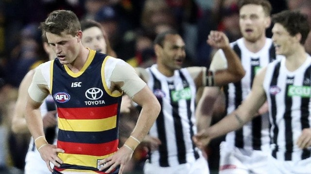 Collingwood Commentary – Crowing again