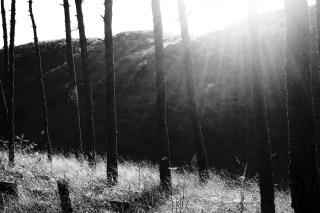 Dunes through the trees