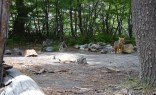 Camping de Agostini; an unexpected encounter