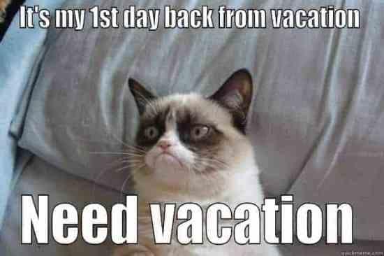 need vacation grumpy cat