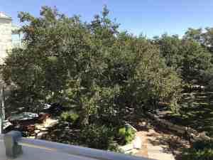 hyatt regency hill country