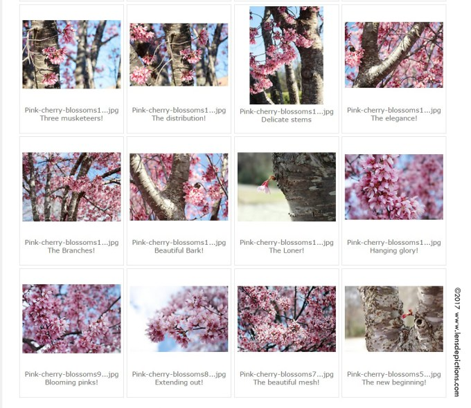 cherryblossoms_2017_screenshot