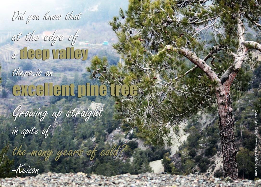 pinetreequote-lensdepictions