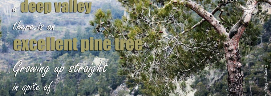 Picture quote with pine tree photo, quote by Keizan