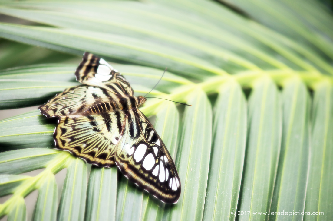 Butterflydesign_lensdepictions