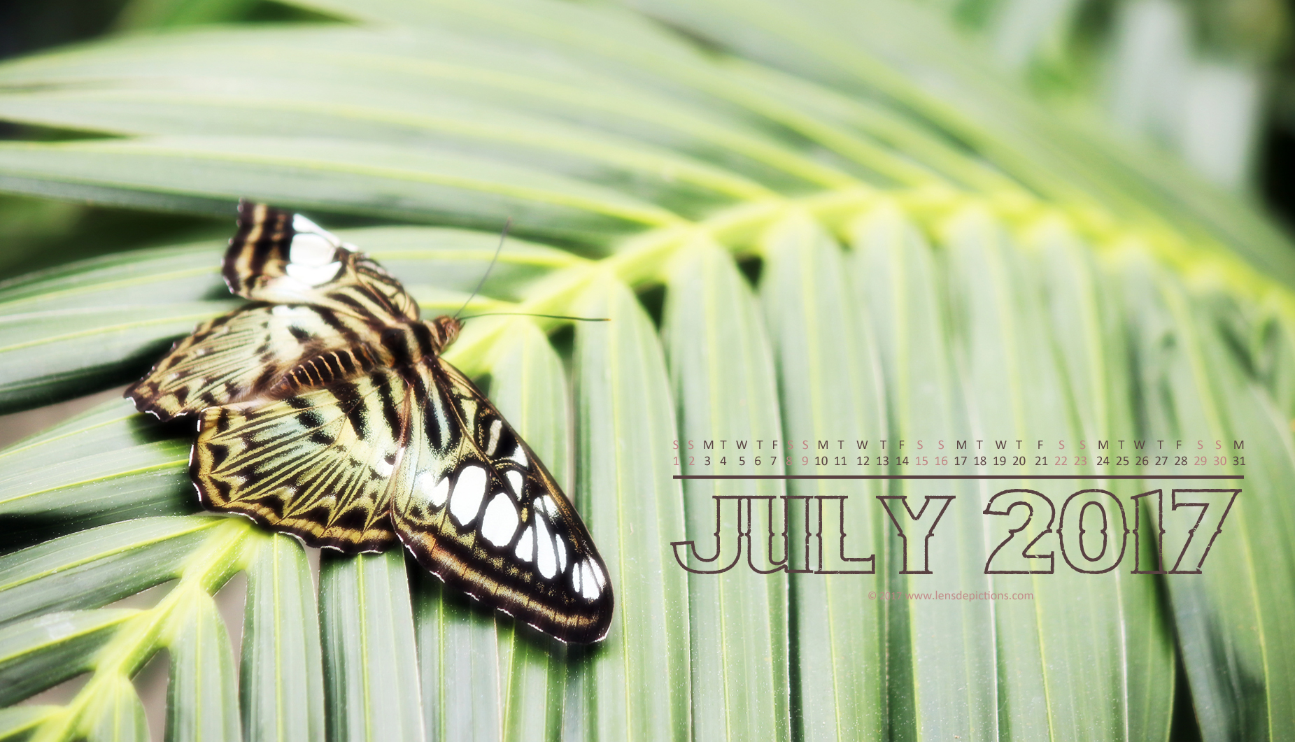 Pieces of a grand puzzle called Nature + July 2017 Free Calendar/Wallpapers!