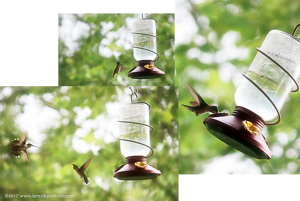Hummingbirds_Lensdepictions_soft