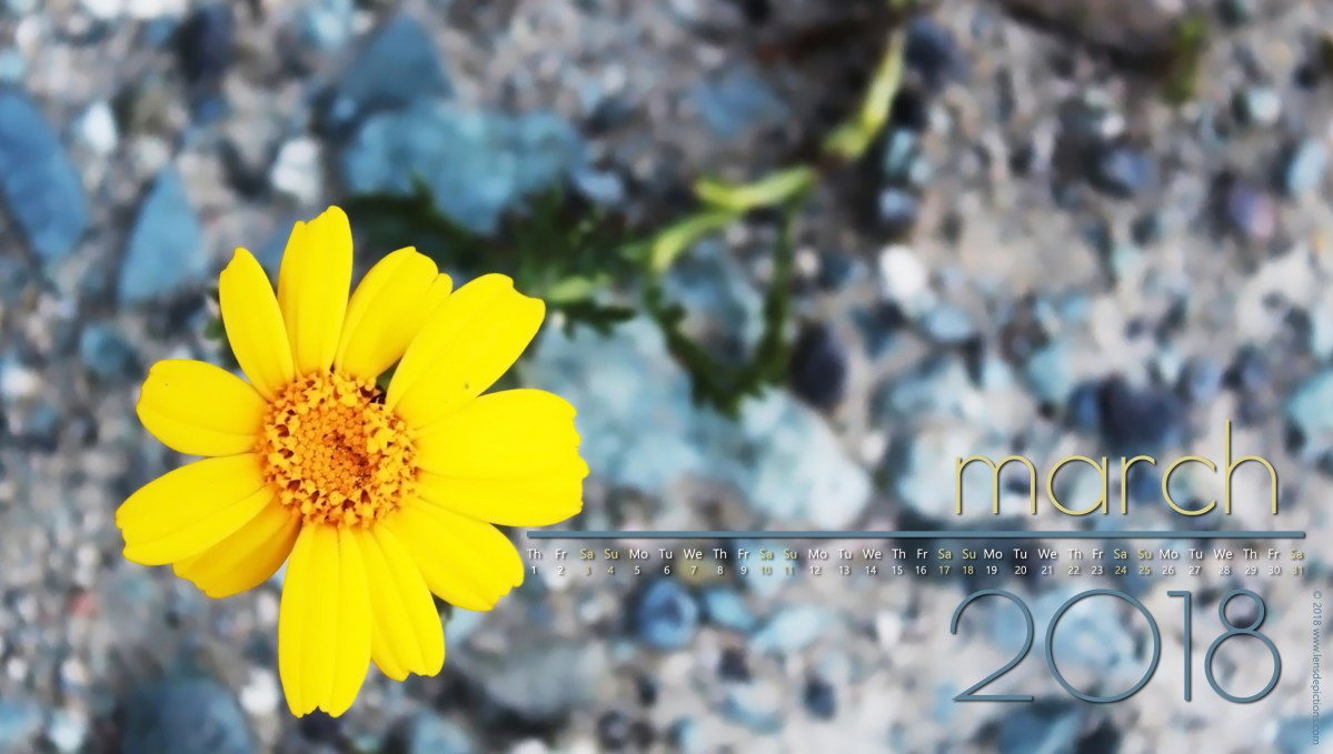 """A Little More Daisy!"" - A Poem + March 2018 Free Calendars/Wallpapers!"