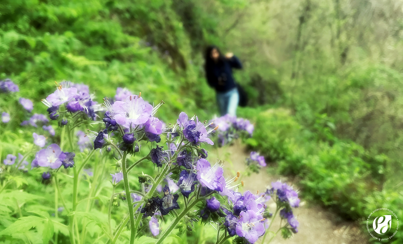 32 amazing spring wildflowers I spotted at Smoky Mountains, before an overwhelming epiphany!
