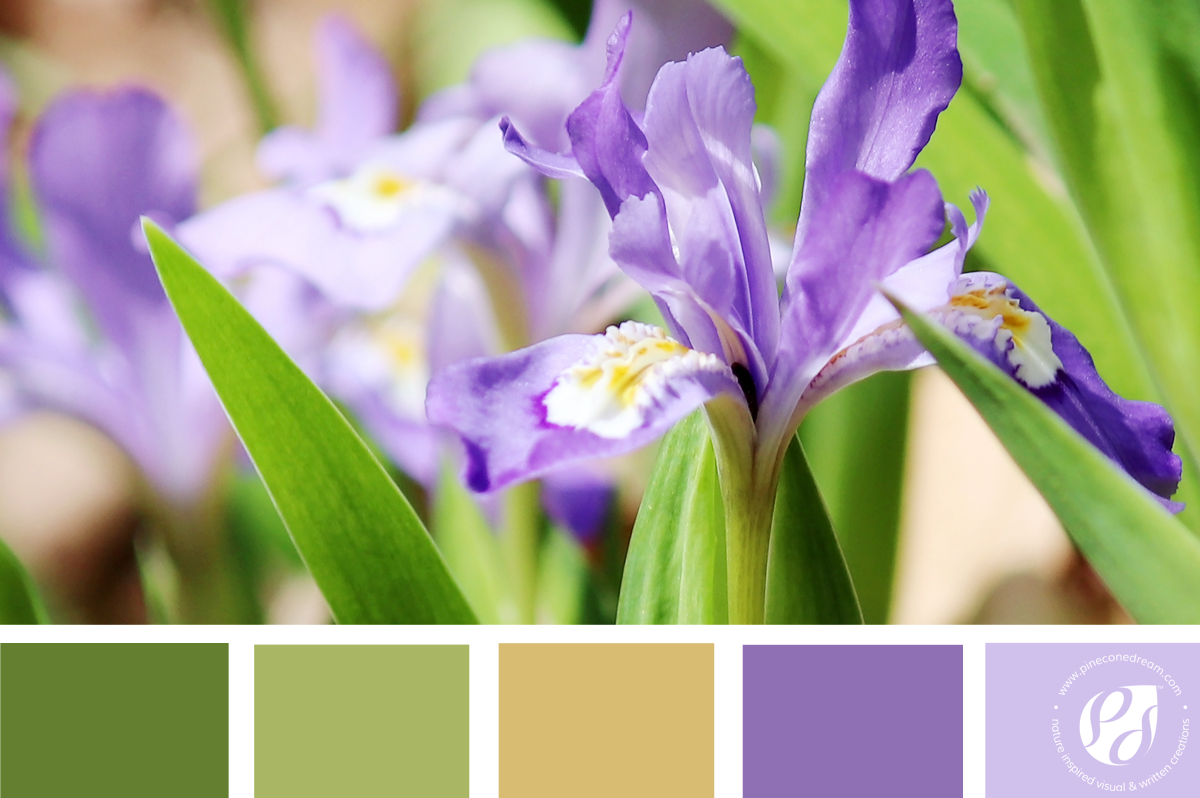 7 gorgeous & easy on eyes color palettes inspired by spring petals for your pastel designs!