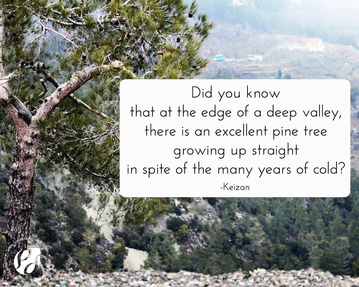 Pine tree inspirational quote by Keizan