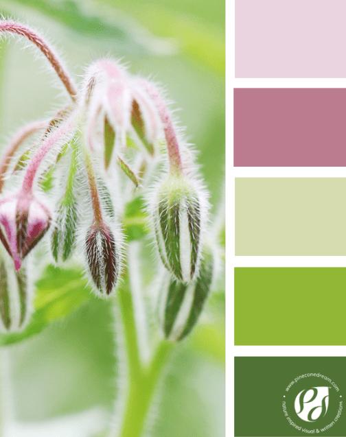 Nature_color_palette_1_pcd2