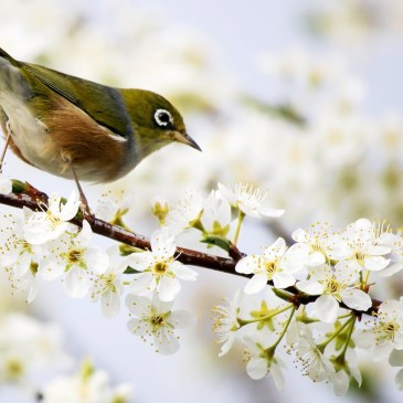 At last an alarm you don't want to snooze – An opinion on the Dawn Chorus smartphone app!