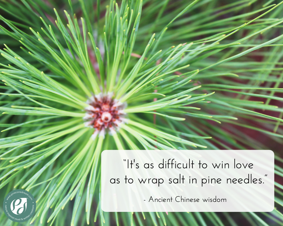 ChineseWisdom_PineTree