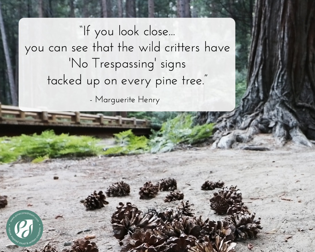 Marguerite Henry Pine tree quote with picture