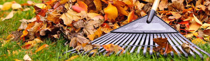Fall Cleanup Services Halifax NS