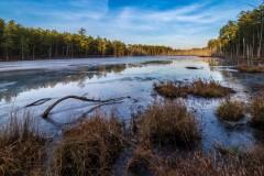 Roberts branch Pine lands