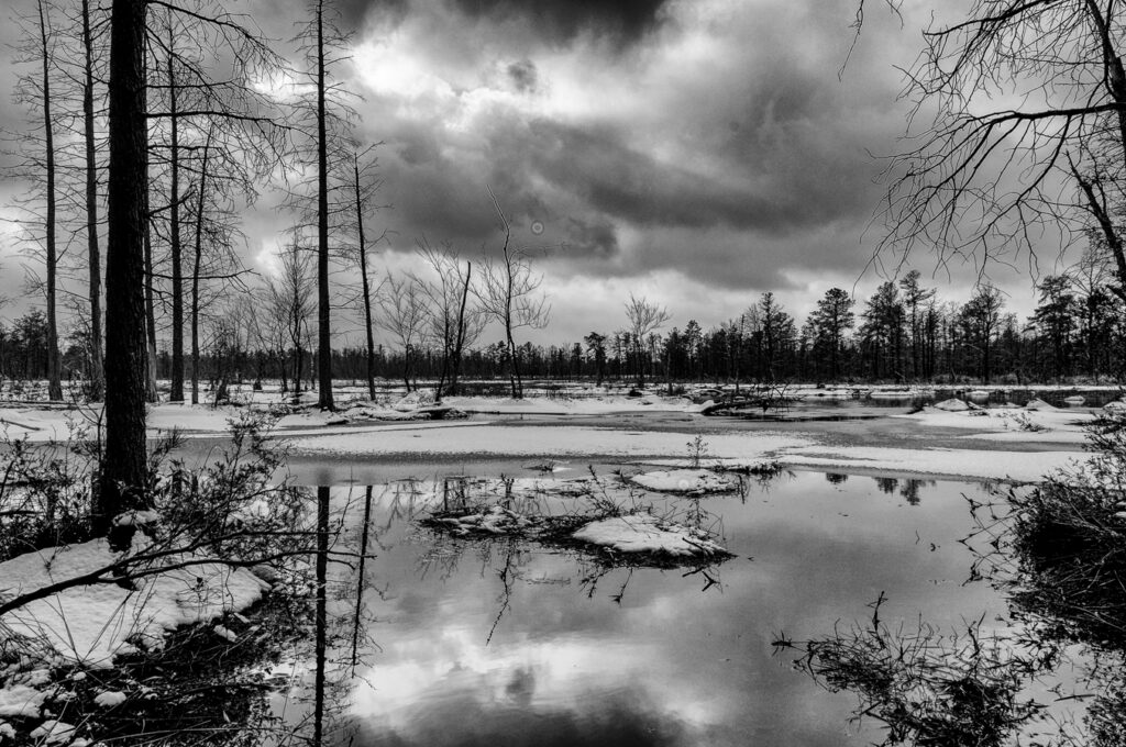 pinelands-b-w-photo-
