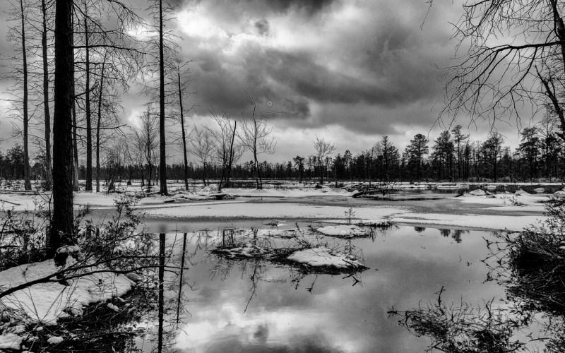 pinelands-b-w-photo-