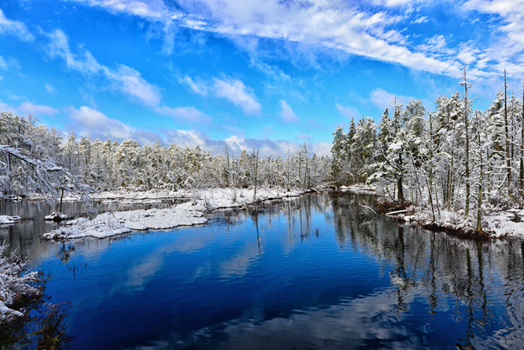 pine-lands-snow-