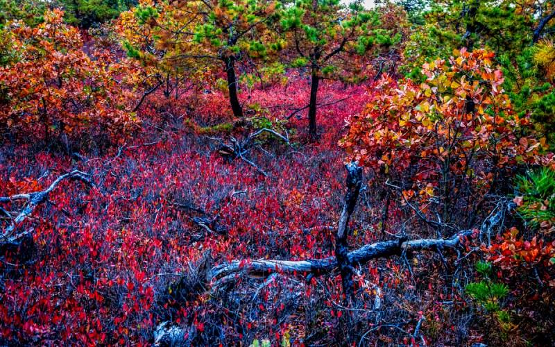 pinelands-photo-