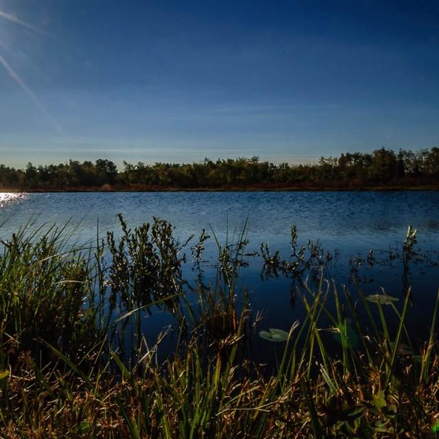 whitesbog-pinelands-photos-