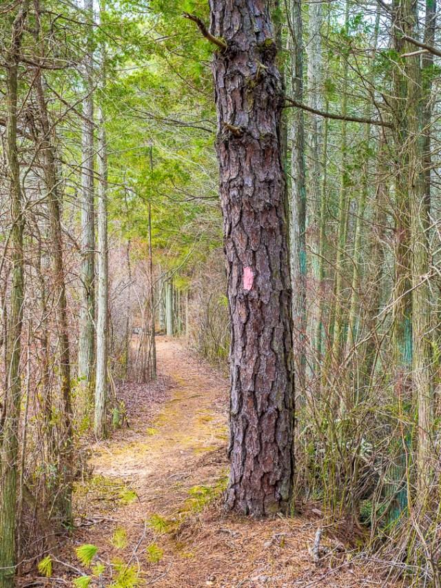 Photo of a Batona Trail Marker