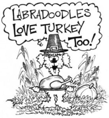 Labradoodles love turkey too