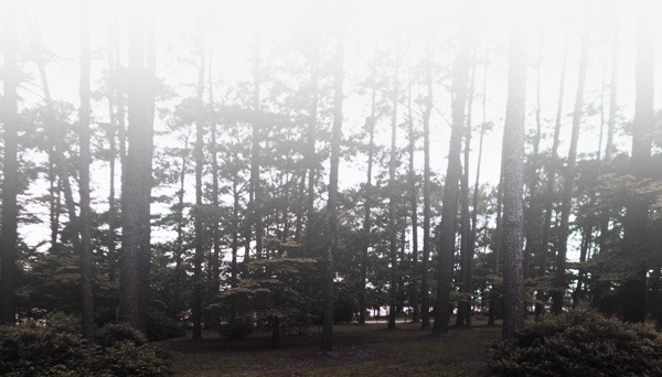 pine-meadow-mastiffs-location