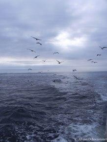 A seagull escort.