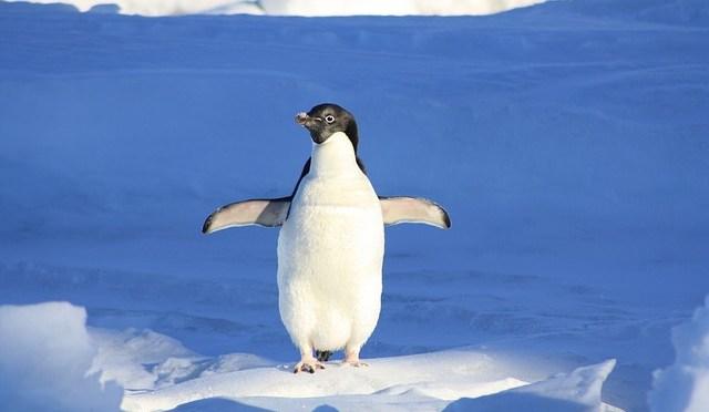 Ne dites jamais ce pingouin est d'une banalité!
