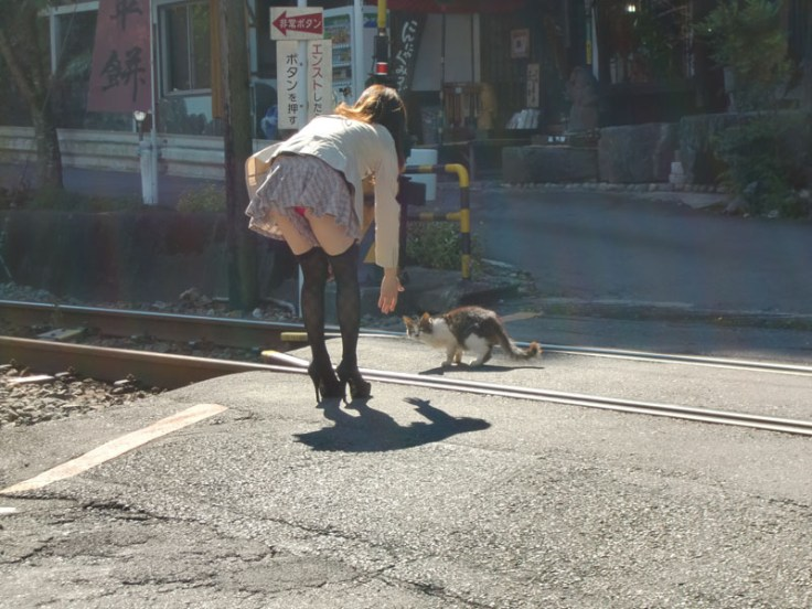 la mere michel retrouve son chat au Japon