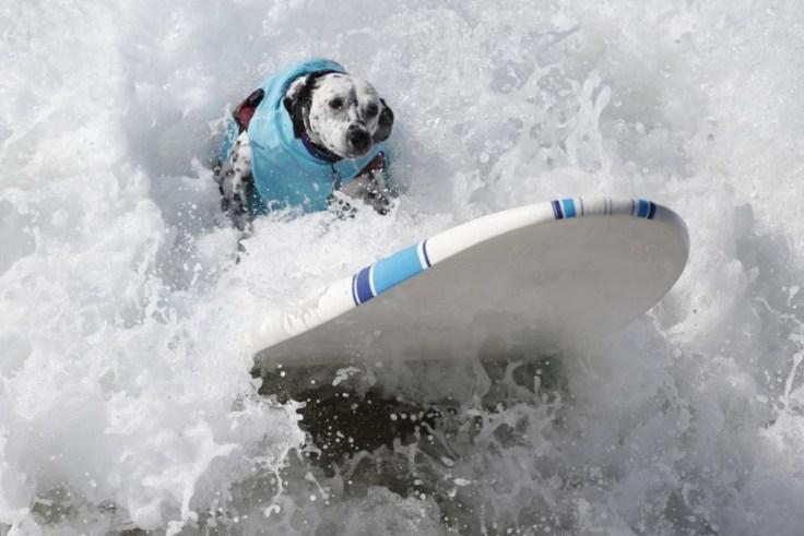 chien-en-surf_002