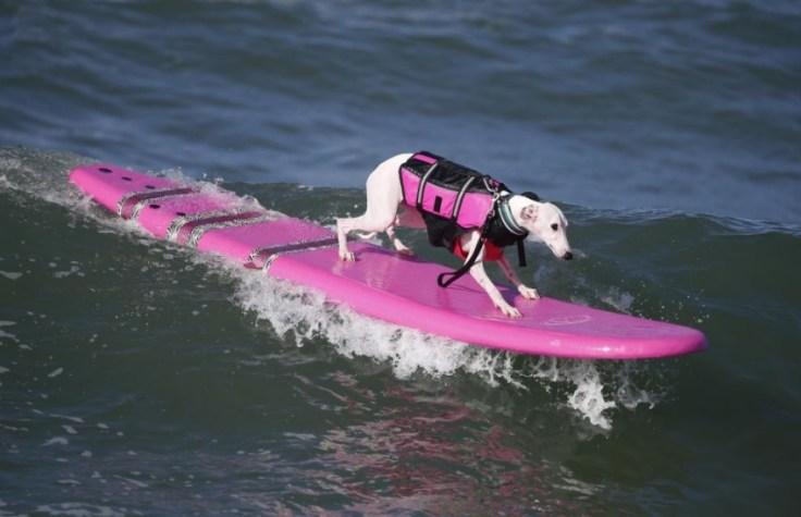 chien-en-surf_005